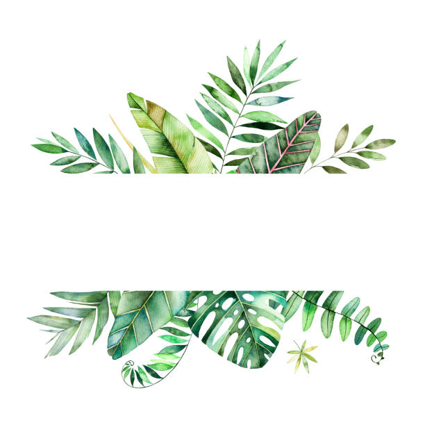 tropical forest collection. - palm leaf stock illustrations, clip art, cartoons, & icons