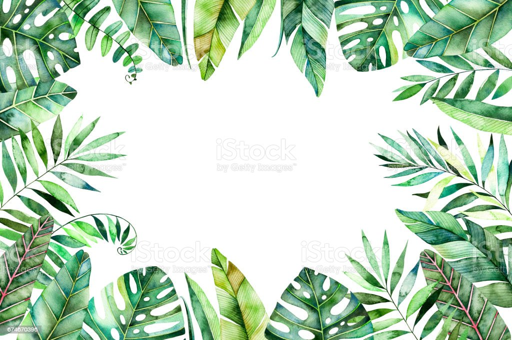 Tropical Forest Collection Stock Illustration Download Image Now Istock Watercolor illustration of exotics colorful leaves and branch with cute quote. tropical forest collection stock illustration download image now istock
