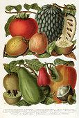 istock Tropical fruits illustration 1895 1187713345