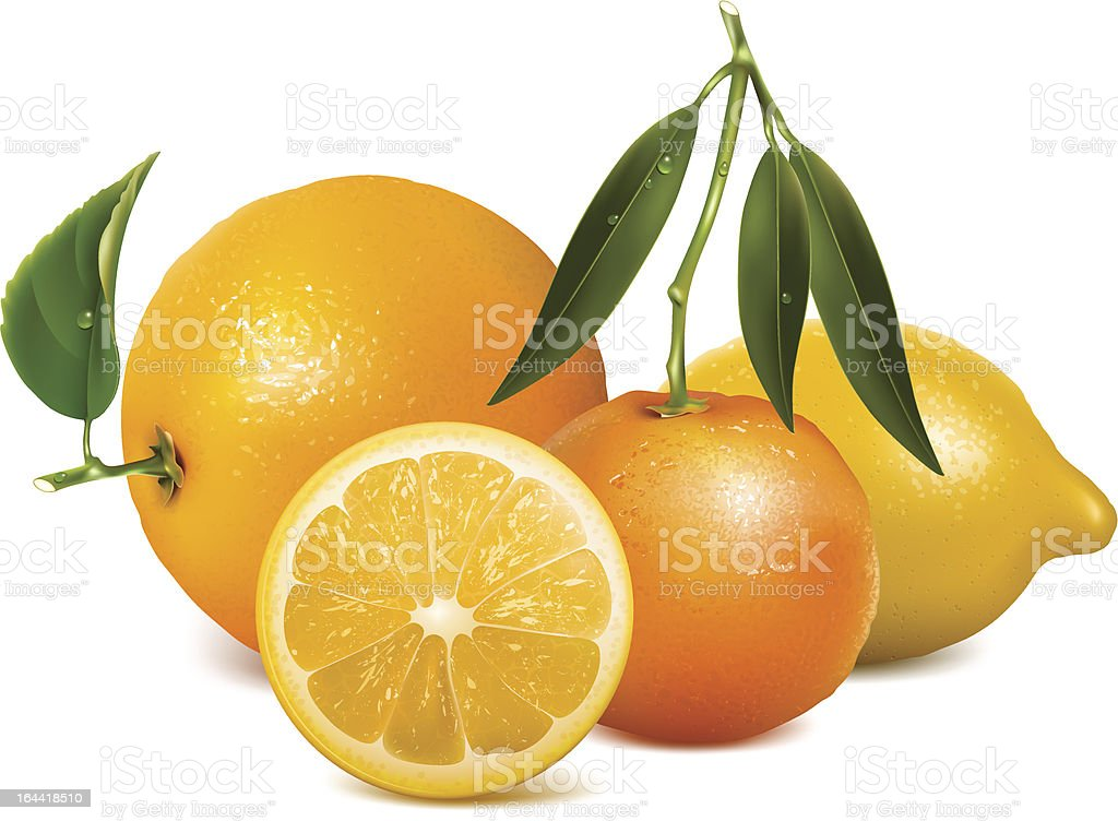 Tropical fruits with leaves royalty-free stock vector art