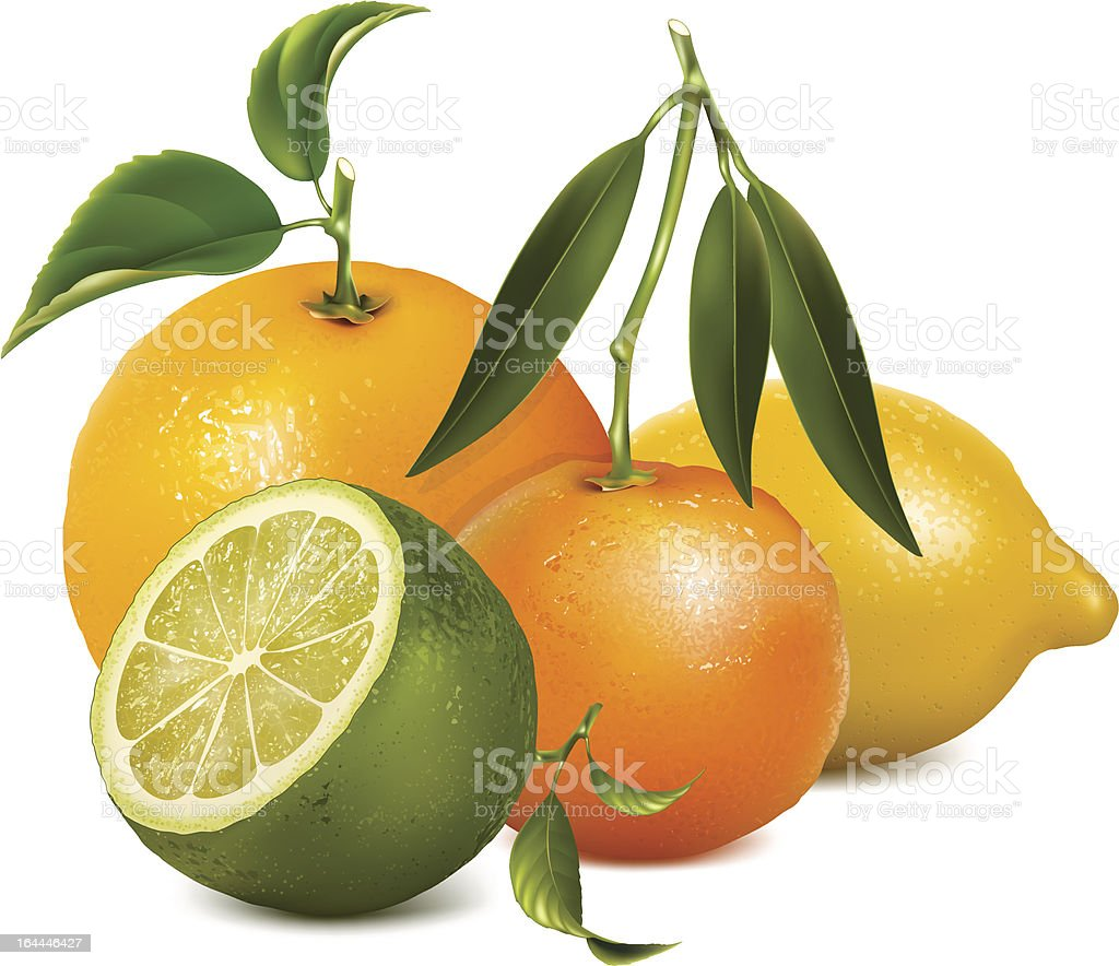 Tropical fruits with leaves vector art illustration