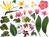 A group of tropical leaves and flowers as individual design elements.