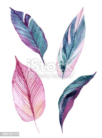 Four tropical leaves isolated on white background. Hand drawn exotic leaves illustration in watercolor.