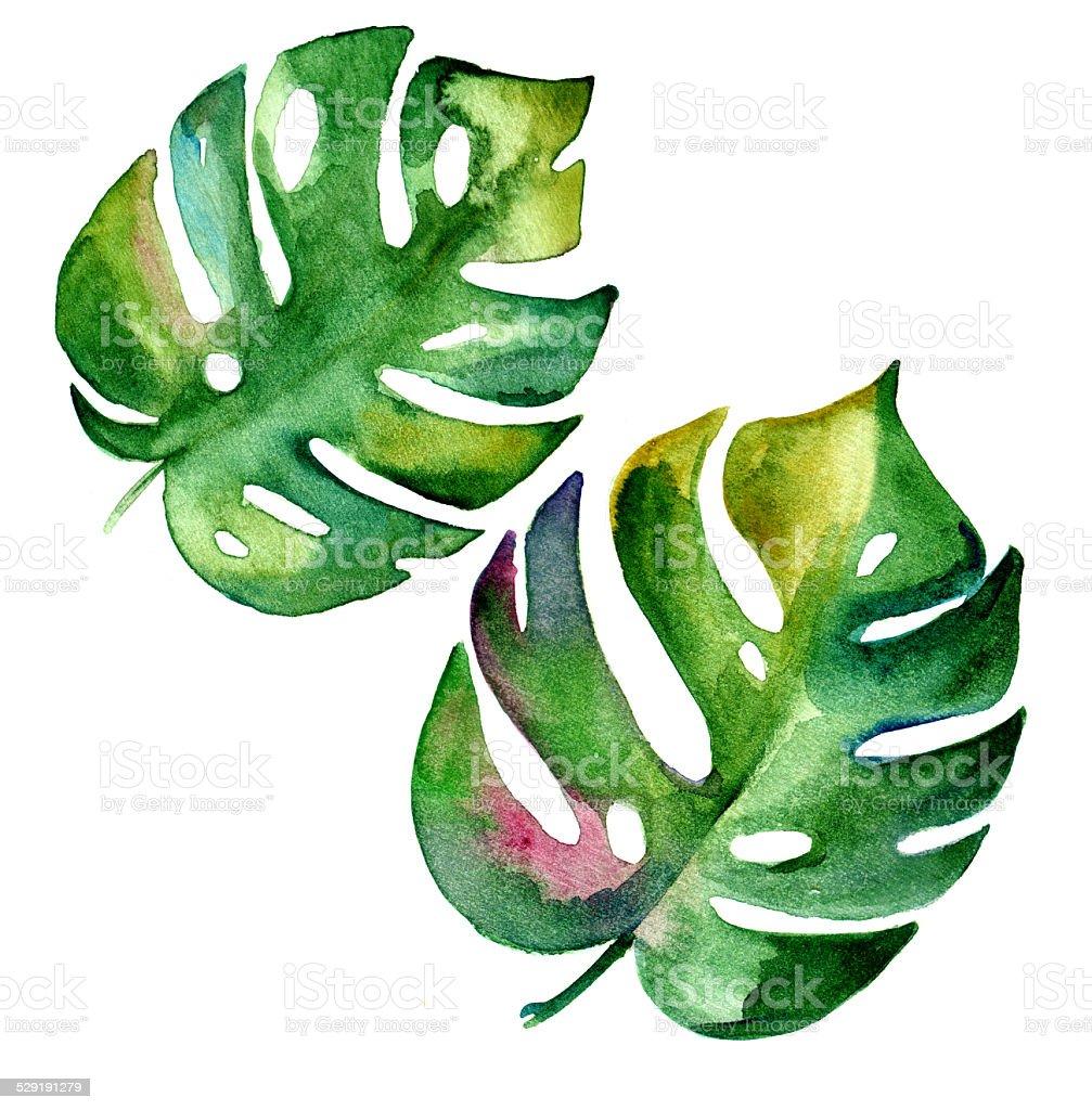 Hojas tropical, ilustraciones en acuarela. - ilustración de arte vectorial