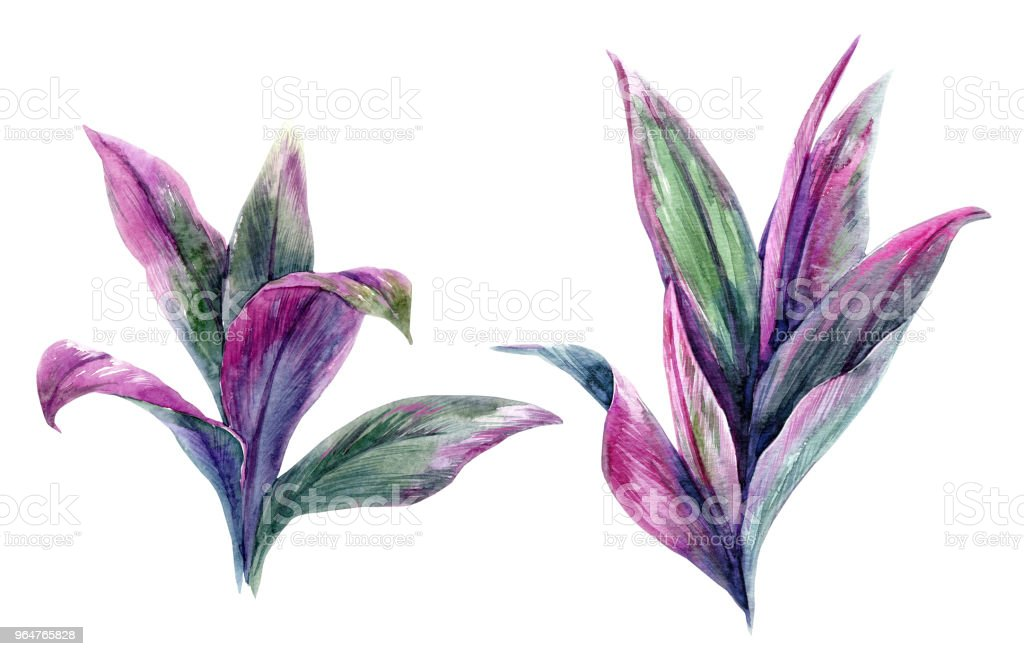 Tropical leaves set royalty-free tropical leaves set stock vector art & more images of art