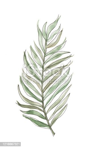Tropical, botanical palm leaf. This watercolor painting is isolated on a white background. Original watercolor painting.
