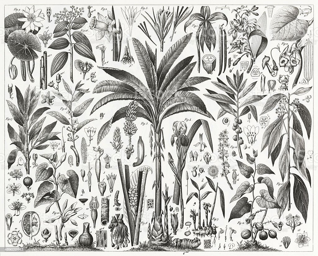 Tropical Plants Engraving vector art illustration