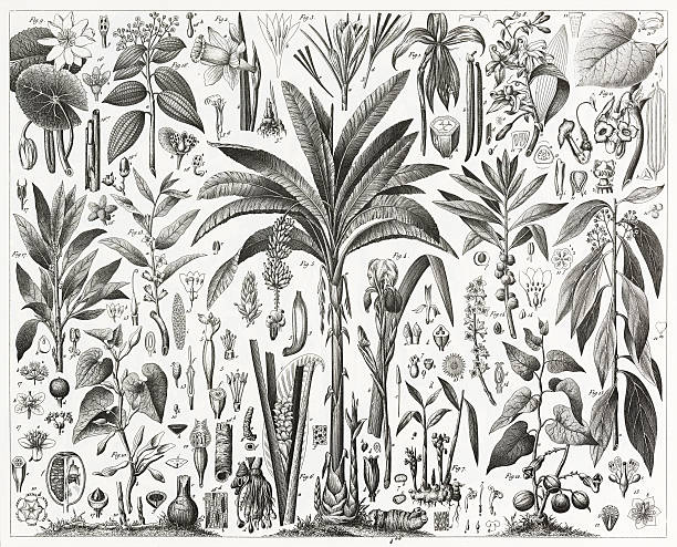 Tropical Plants Engraving vector art illustration