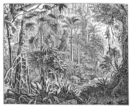 Tropical plants in the tropics
