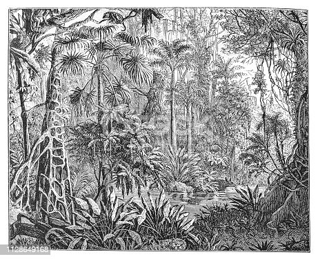 Illustration of a Tropical plants in the tropics