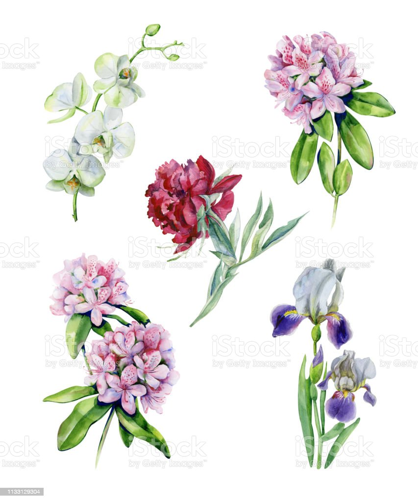 Tropical rhododendron flowers and iris flower. vector art illustration