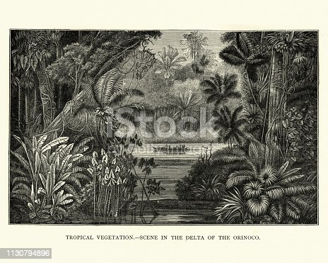 Vintage engraving of Tropical scene, Delta of the Orinoco river, Colombia, 19th Century