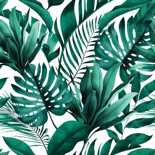 Tropical seamless pattern with exotic monstera, banana and palm leaves on white background. Tropical seamless pattern with exotic monstera, banana and palm leaves on white background. banana borders stock illustrations