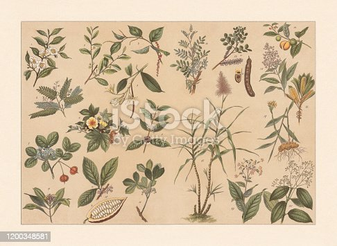 istock Tropical useful plants, chromolithograph, published in 1897 1200348581