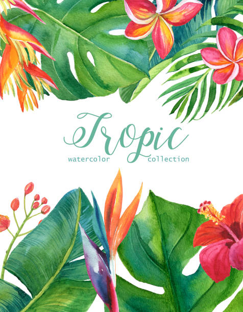 Tropical watercolor illustration with leaves and flowers. Geometric frame for invitation, wedding, birthday, baby shower, Save the Date and other. Tropical watercolor illustration with leaves and flowers. Geometric frame for invitation, wedding, birthday, baby shower, Save the Date and other. Palm, monstera, green and gold leaves, banana, watercolor, fern. banana borders stock illustrations