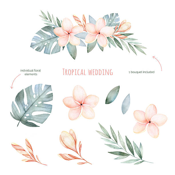Tropical Wedding floral set.Beautiful soft floral collection Tropical Wedding floral set.Beautiful soft floral collection with leaves and flowers(tropical leaves,plumeria).Watercolor individual elements+1 pastel colored bouquet.Perfect for wedding,invitations. frangipani stock illustrations