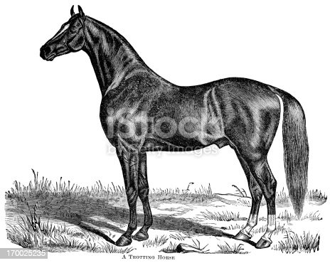 Engraving of trotting (race) horse. E. H. Dewey delineator. In Cyclopedia of Live Stock 1882.