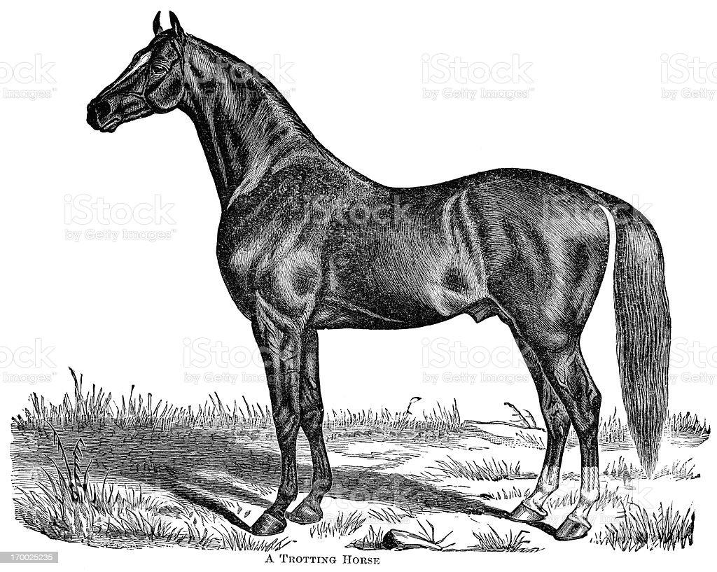 trotting horse engraving vector art illustration