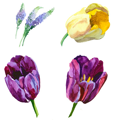 Tulips and flowers watercolor isolated on white set.