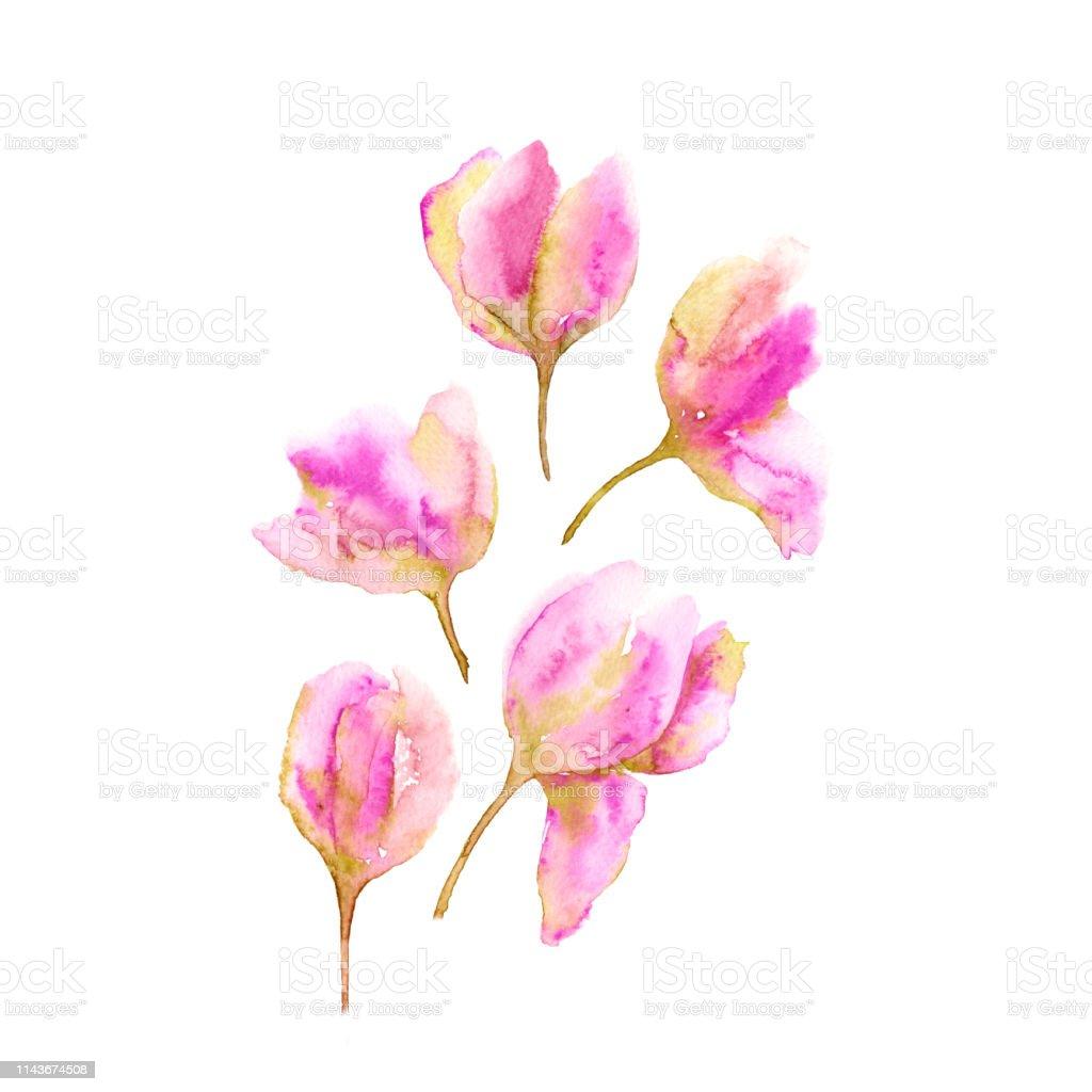 Vetores De Ramalhete Dos Tulips Tulipas Rosa Delicadas Flores