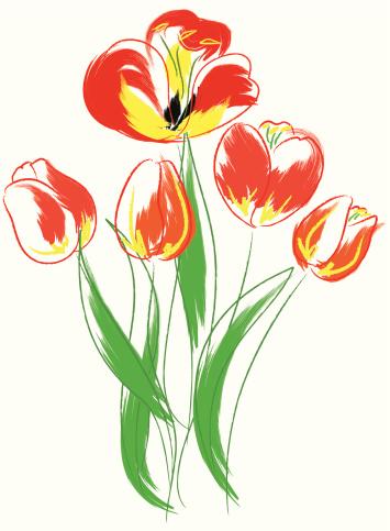 Tulips bouquet.