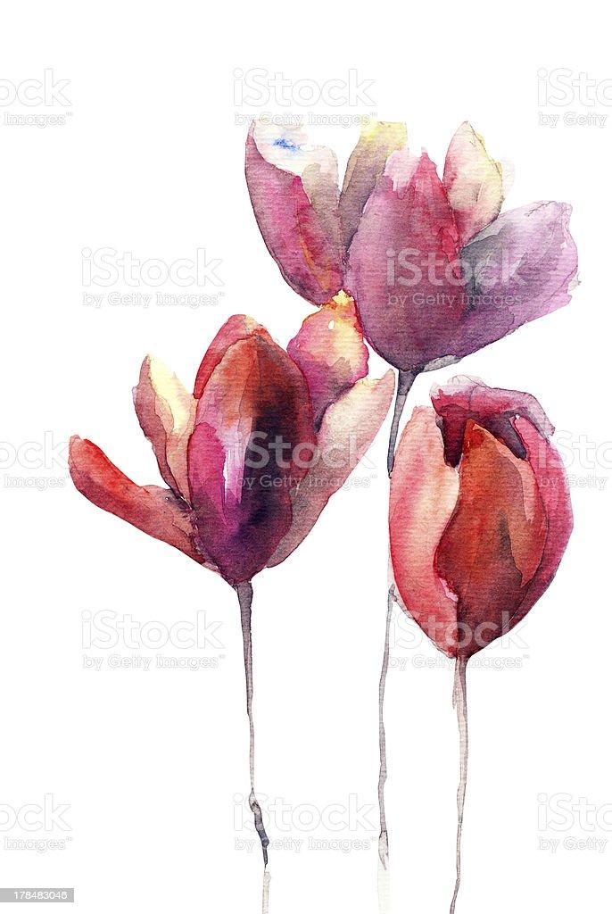 Tulips flowers vector art illustration