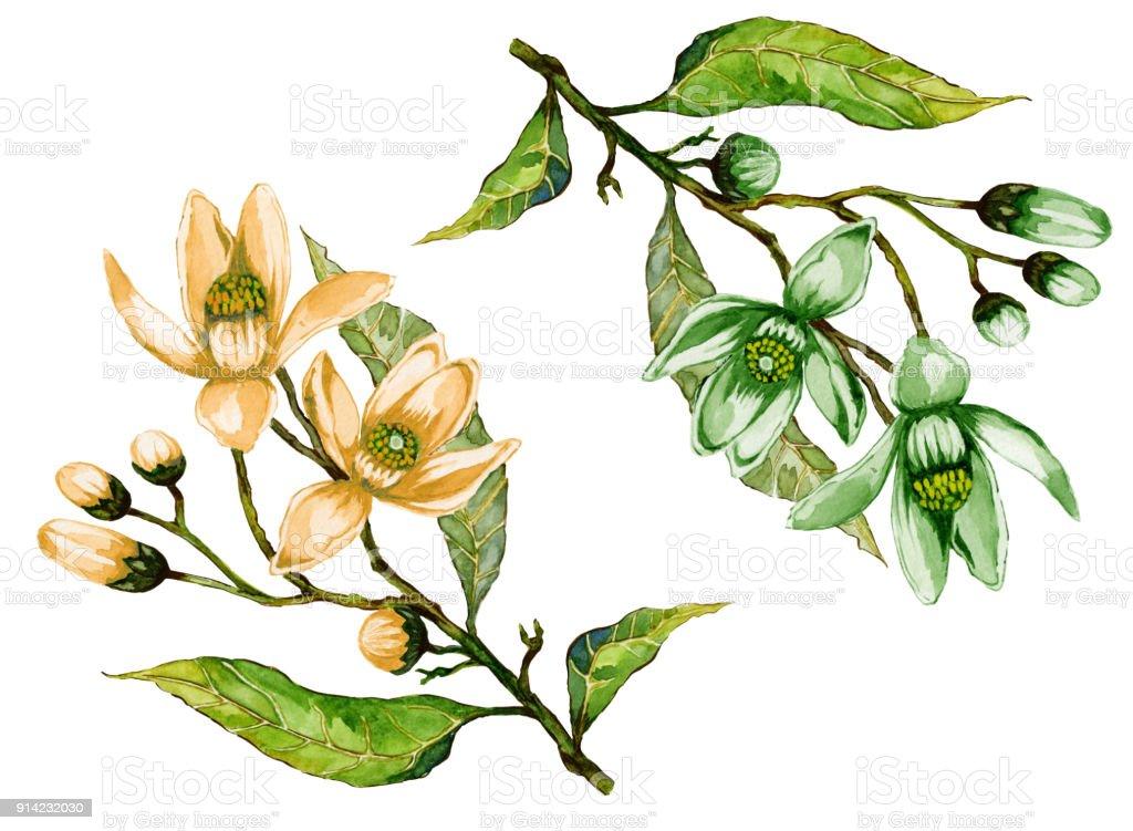 Ilustración de Ramitas De árboles Frutales En Flor Conjunto Floral ...