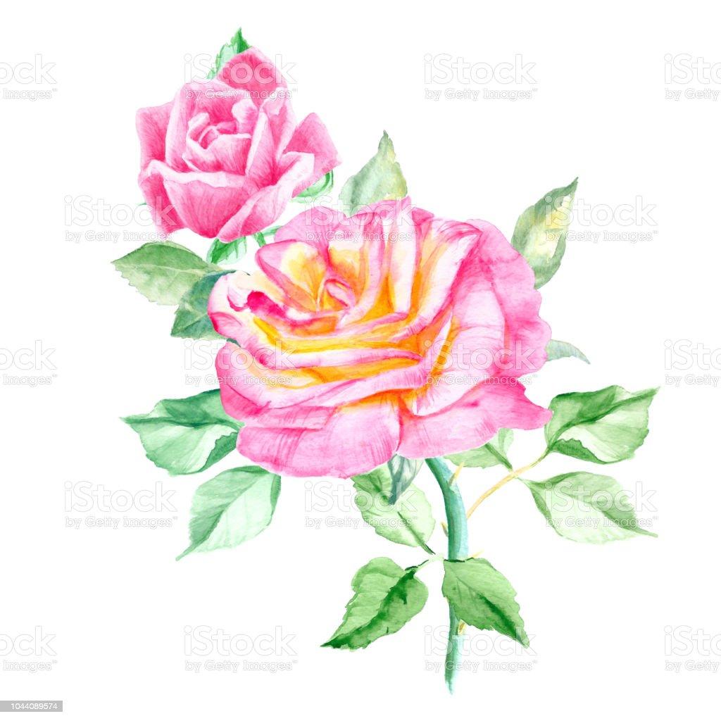Iki Güzel Pembe Gül Yaprakları Ile Suluboya çiçek Boyama Düğün