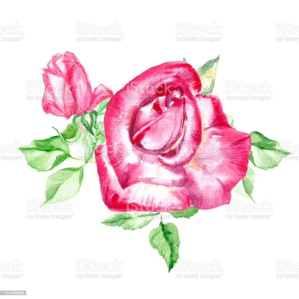 Iki Güzel Pembe Gül Yaprakları Ile Suluboya çiçek Boyama