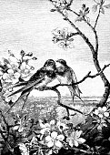 Two birds in love sitting on a branch
