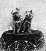 istock Two dogs on a table 1340470628
