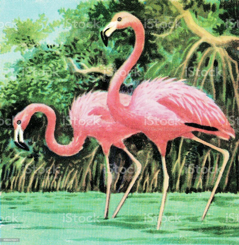 Two flamingos vector art illustration