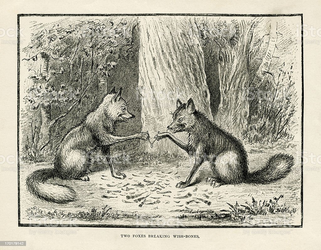 Two foxes breaking a wishbone (Victorian engraving) vector art illustration