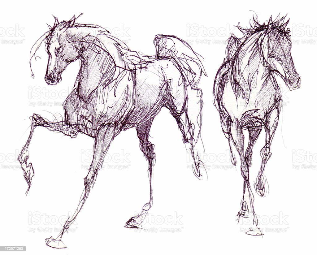 Two horses drawn in ink vector art illustration