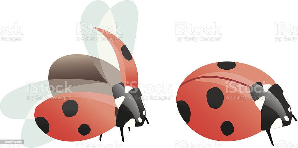 Two ladybugs vector art illustration