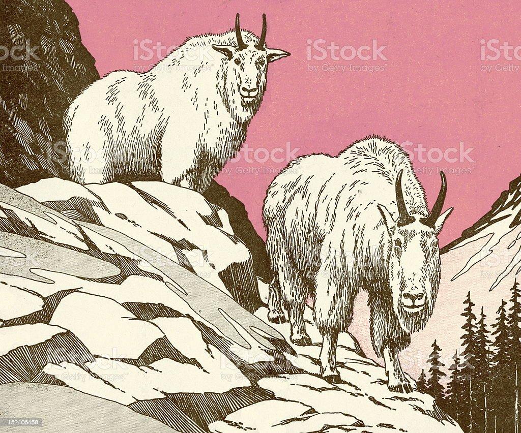 Two Mountain Goats vector art illustration