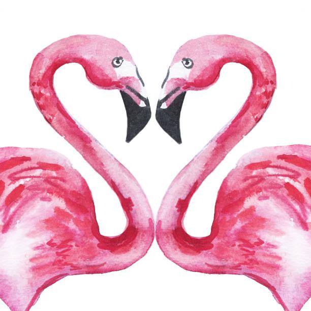 ilustrações de stock, clip art, desenhos animados e ícones de two pink flamingos in love forming a heart. watercolor illustration. - bills couple