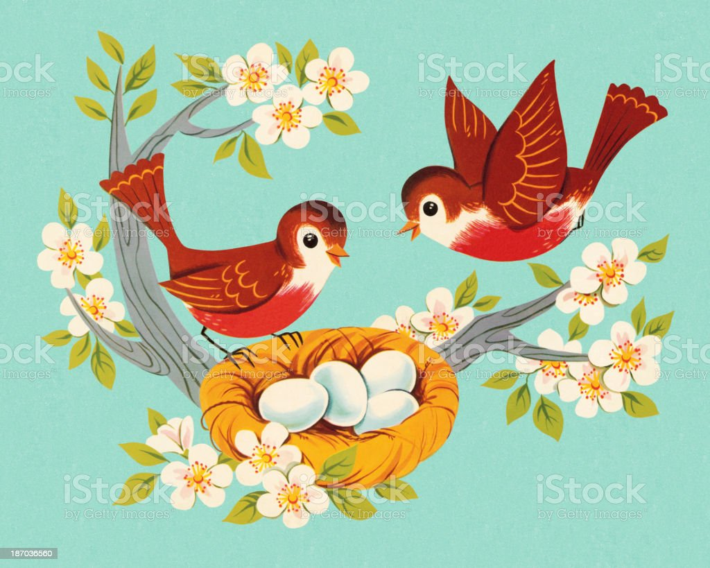 Two Robins and A Nest vector art illustration