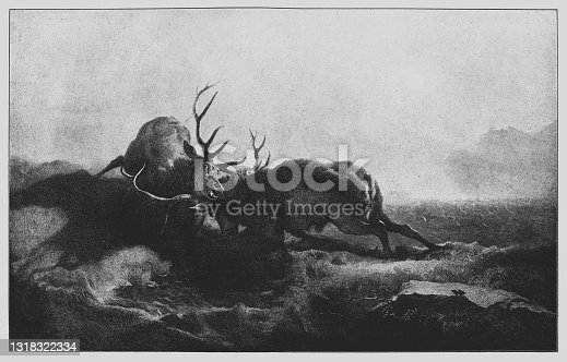 istock Two Stags Battling By Moonlight 1318322334