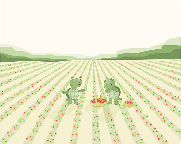 Two Turtles (poster) Two Turtles are picking up strawberries on a huge field. strawberry field stock illustrations