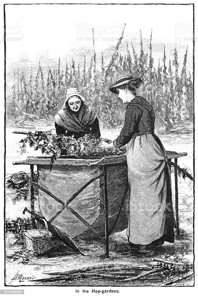 "Two Victorian women working in Kent hop fields Two Victorian women working in the hop gardens in Kent. From ""The Cottager and Artisan: The People's Own Paper"" illustrated by various artists and published by The Religious Tract Society, London, in 1896. 19th Century stock illustration"