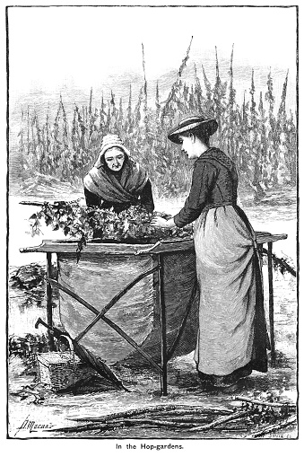 Two Victorian Women Working In Kent Hop Fields Stock Illustration - Download Image Now