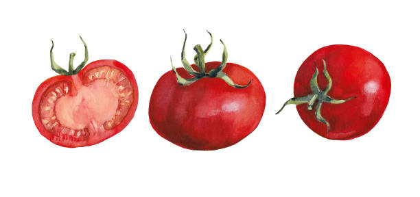 two whole ripe tomatoes and half of a tomato white background. - tomato stock illustrations