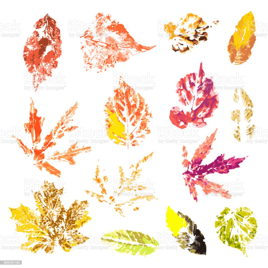 Unique Autumn Leaves Set Autumn Leaves Prints On A White Background Stock Illustration Download Image Now Istock