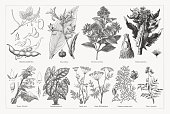 istock Useful and medicinal plants, wood engravings, published in 1893 1311498942