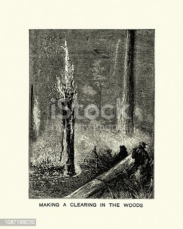 Vintage engraving of Using fire to make clearing in the woods, California.  The Graphic 1884