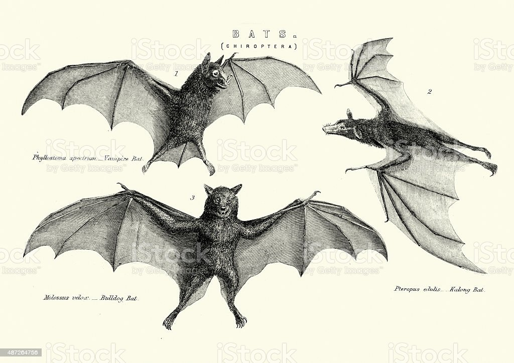 Vampie, Bulldog and Kalong Bats vector art illustration