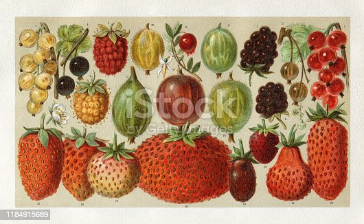 Variation of berries - Strawberry - Gooseberry - Blackberry - Rasberry Original edition from my own archives Source :
