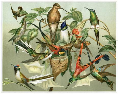 Variation of colourful Hummingbird illustration