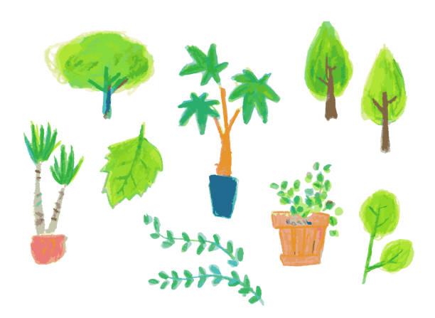 illustrazioni stock, clip art, cartoni animati e icone di tendenza di variations of houseplants of various shapes - forest bathing